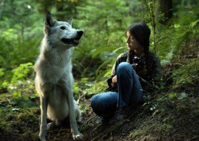 Der Film im Wald